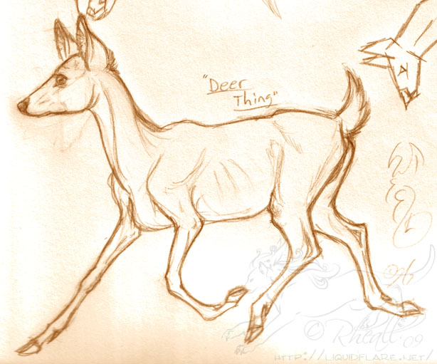 Deer anatomy drawing