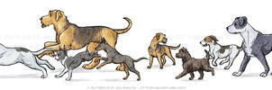 Dog Breeds - The Terrier Group