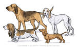 Dog Breeds - The Scent Hound Group