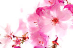 spring is here by FlyingRolf