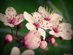 Very beginning of spring by KathleenOCeann