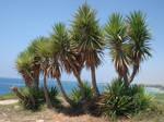 Palm Foliage 01 by Tanglimara-Stock