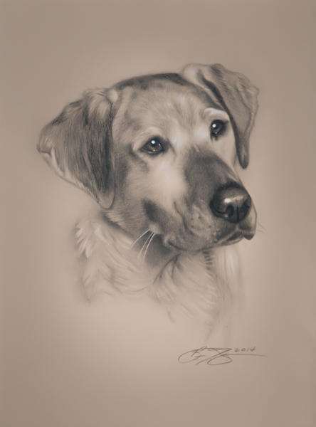 Easy realistic drawings of dogs - photo#15
