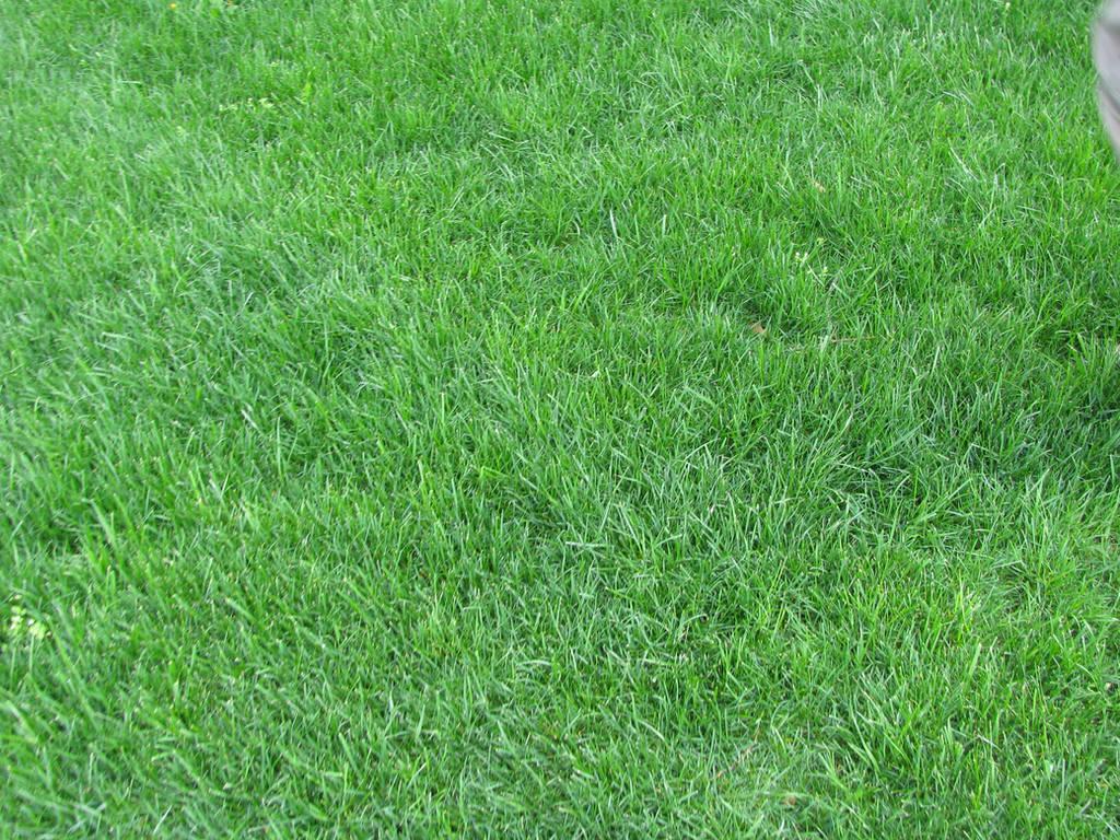 Grass Texture by DeathlyRain