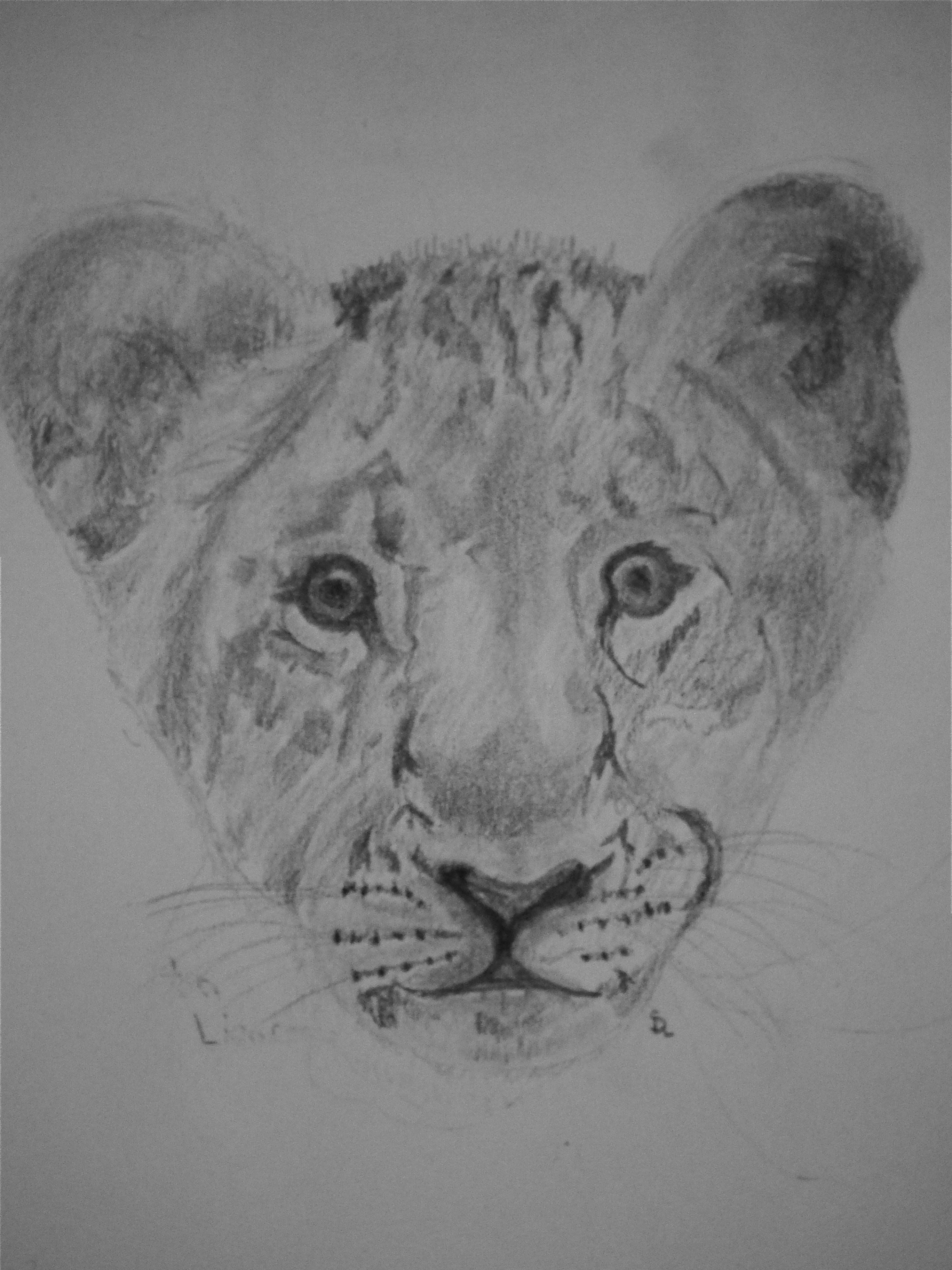 Lion cub by Malamalangue