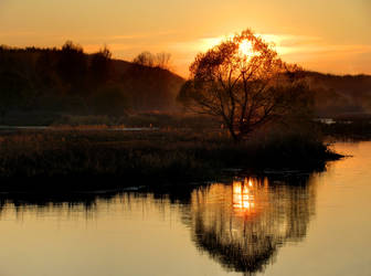 Sun sets into the tree by DeingeL