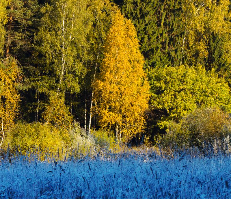 Between the Seasons by DeingeL
