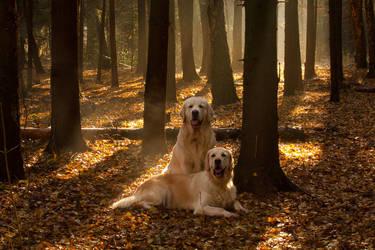 Golden Light by DeingeL