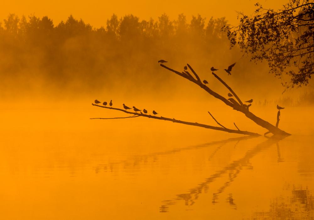 Birds by DeingeL