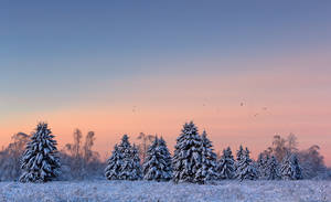 Snowy Trees and the Birds