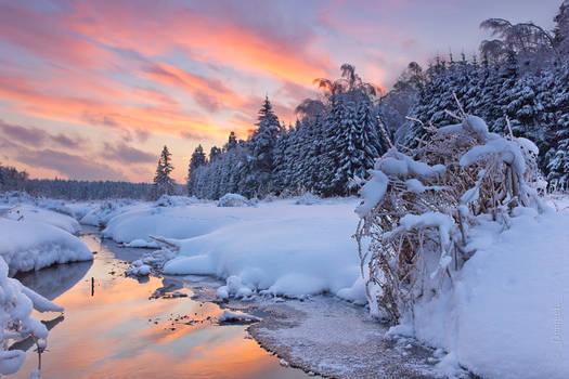Don't go away, my dear Winter