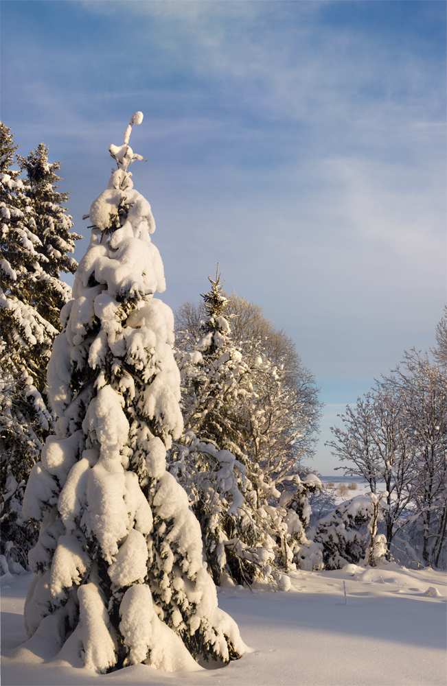 Natural Christmas Tree by DeingeL
