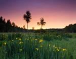 Iris Valley Before The Sunrise by DeingeL