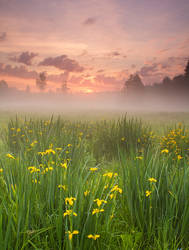 Morning Harmony
