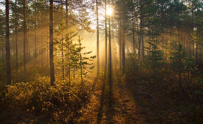Morning Lights by DeingeL