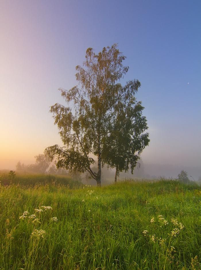 Quiet Morning by DeingeL