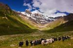 Elbrus and Yaks by DeingeL