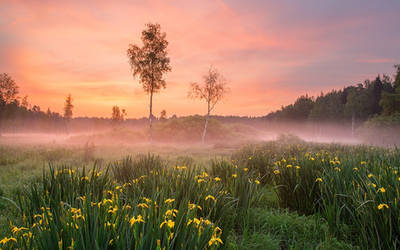 The Morning Comes by DeingeL