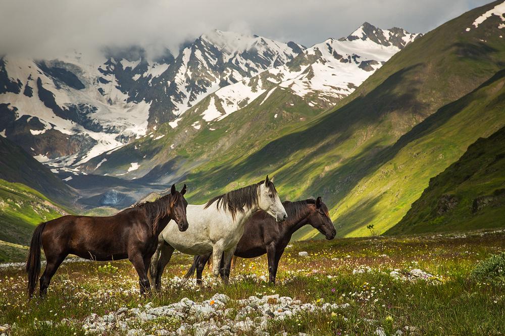 Free Horses by DeingeL