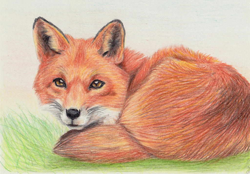 How to draw a realistic sitting fox for Cool fox drawings