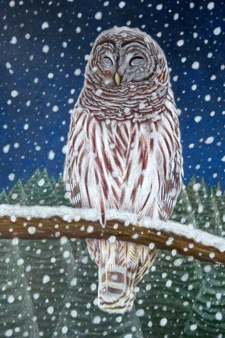 Barred owl in the snow by Light-Lein