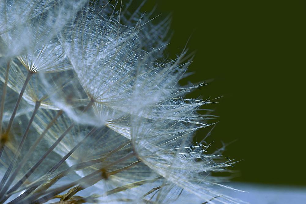 Soffioni al vento by Amersill