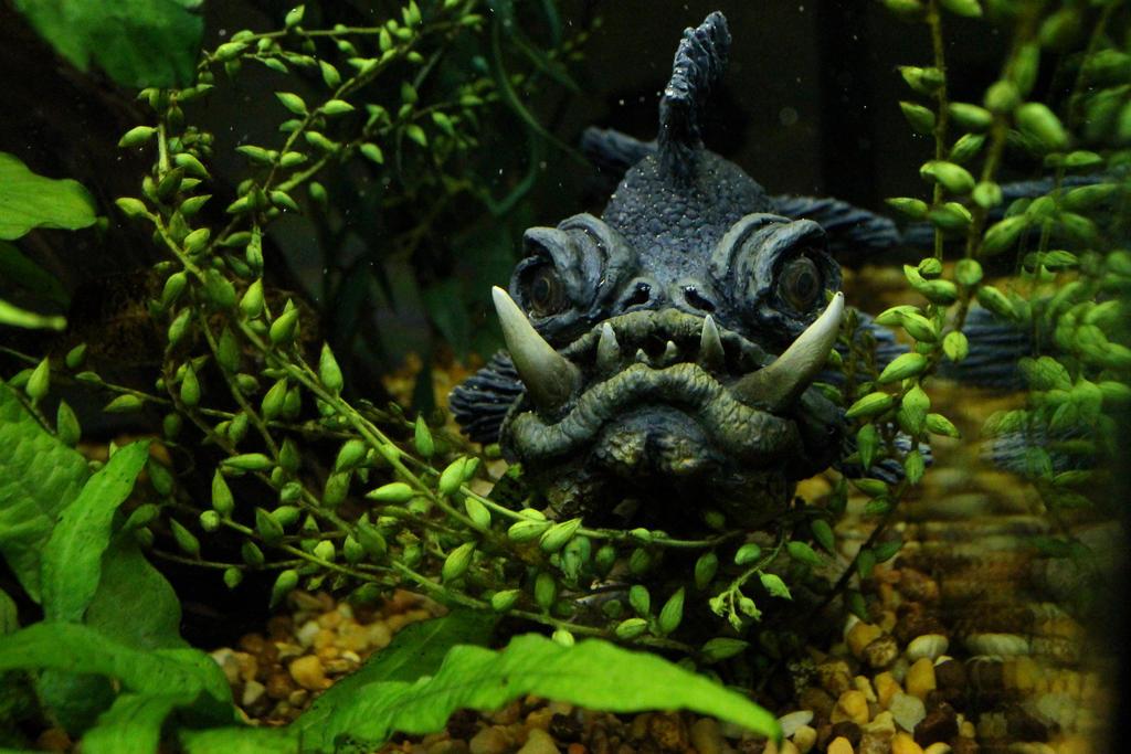 Closeup of Orc Goldfish in Aquarium by RavendarkCreations