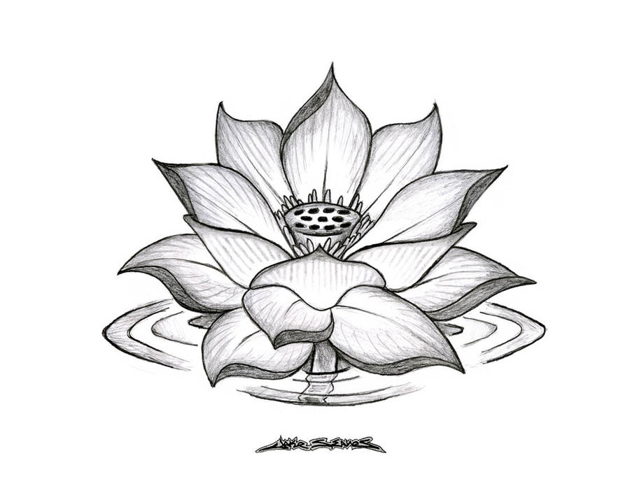 Go Back gt Gallery For Simple Lotus Flower Drawing Tattoo