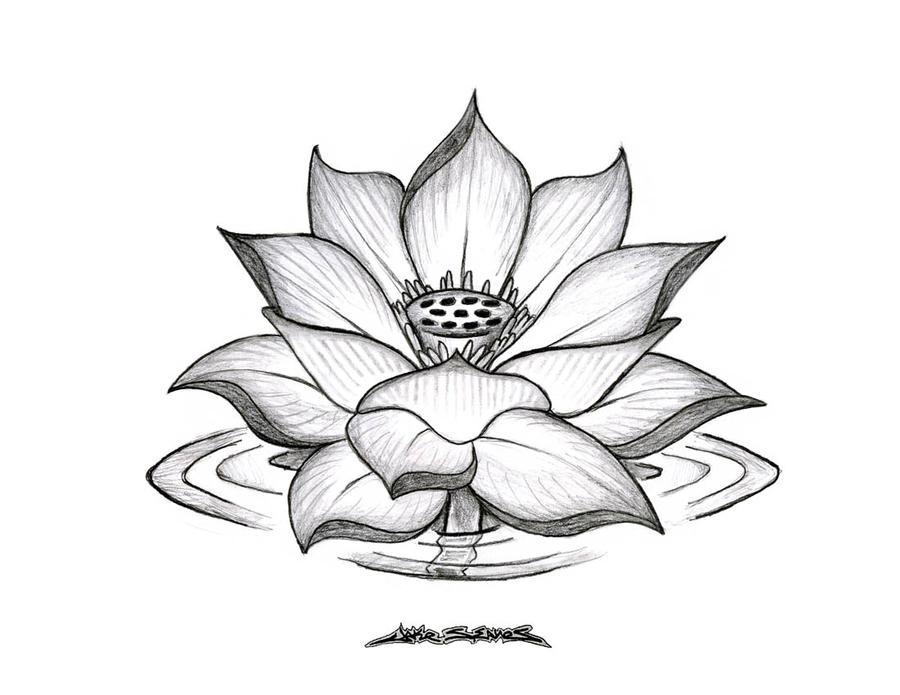 Lotus Flower By MuddyGreen On DeviantArt
