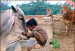 Children and Animals....