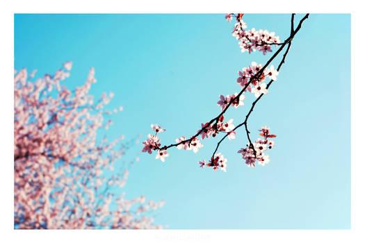 Sakura Story II