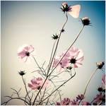 Spring Ladies by Hantenshi