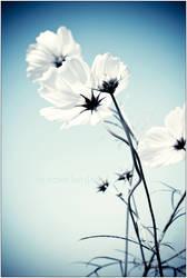 Flowered Conversation by Hantenshi