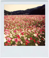 Forgotten Paradise by Hantenshi