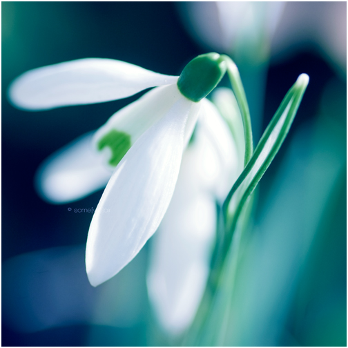 Spring Wind by Hantenshi