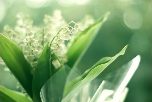 Gift From Her Garden by Hantenshi
