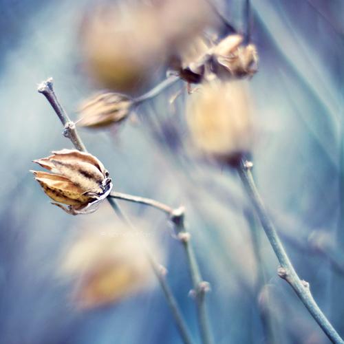 Winter Wind by Hantenshi