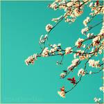 Japanese Sakura by Hantenshi