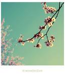 Sakura Story by Hantenshi