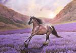 COMM: Lilac Sky