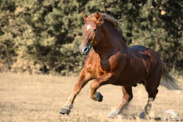 Hermitage - soviet stallion - 2018