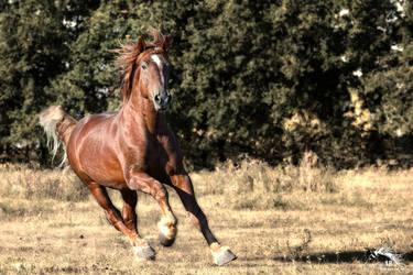 Terek - soviet stallion - 2018