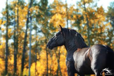 jaeger - soviet stallion - 2018