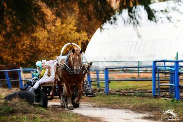 horse in a cart - 2018