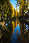 Autumn Trees on the Avon