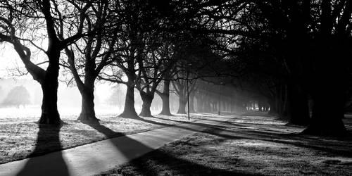 Early Morning B+W by Niv24
