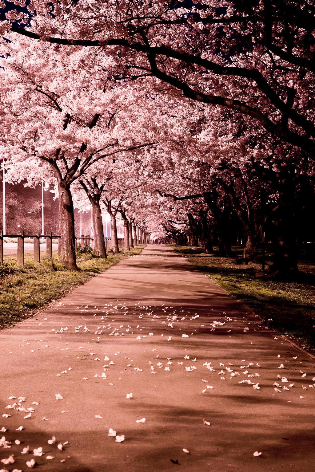 Nature S Blossom Bonsai Tree Kit