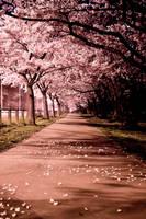 Blossom Path by Niv24