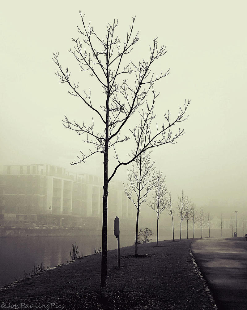 Foggy Lines by Mincingyoda