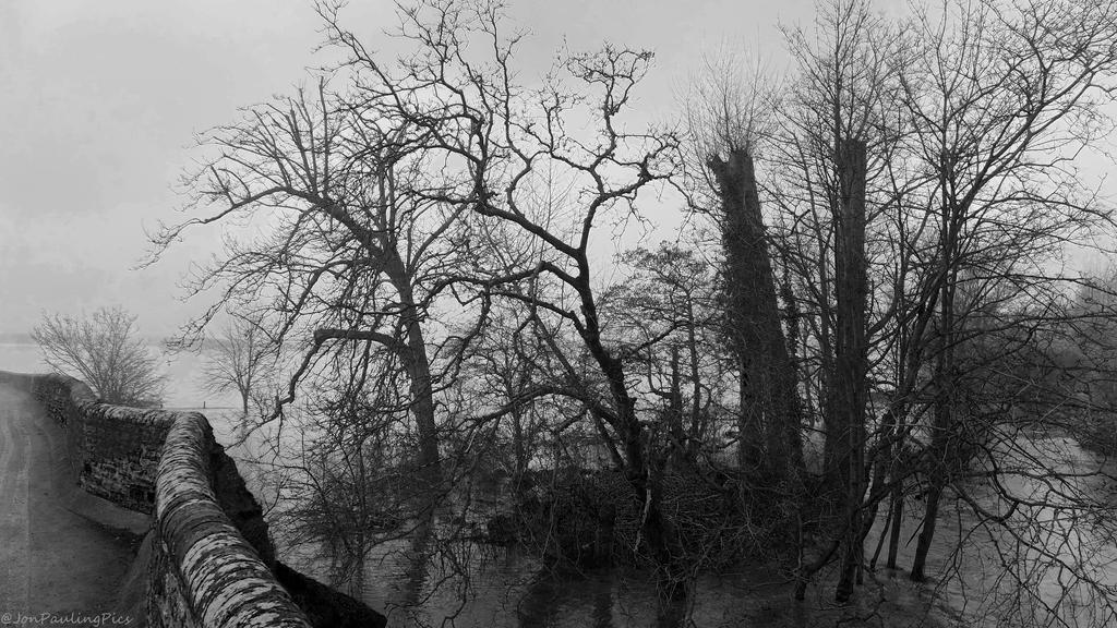 Flood In Bw by Mincingyoda